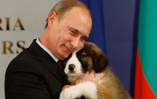 Putin yaponların it hədiyyəsini rədd etdi