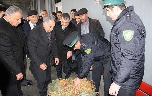 Çindən 1.5 milyon tut ağacı gətirildi
