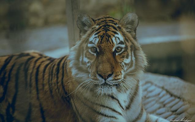 Bakıdakı zooparkdan maraqlı - Fotolar